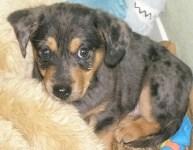 Sandy puppy 2