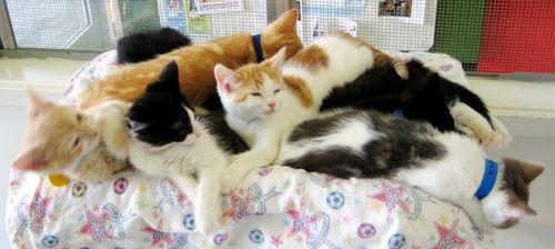 Kitten pile 7-27-10