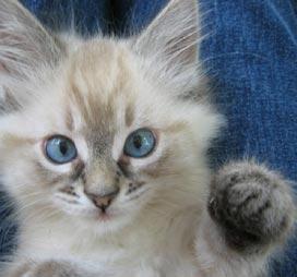 CAS_Kitten_03