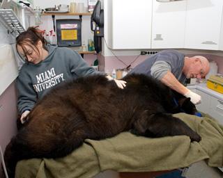 Black Bear 091486 Pre-release Exam 1