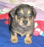 Sandy puppy 1
