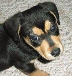Sandy pup 3
