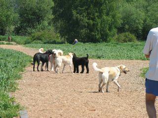 Dog-Park_Deb-Handrich