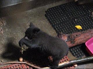 Bear Cubs 070110 004_0001