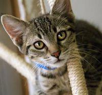 CAS_Kitten_01