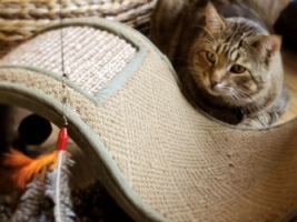 Sumo and Cat Scratcher