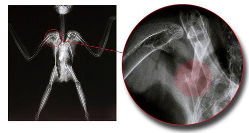 01 BDOW-112495-radiograph