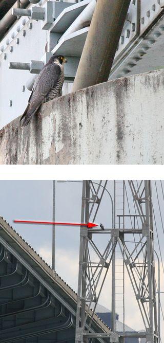 Two Photos copy