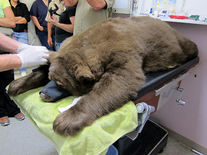 Black-Bear-111089-Release-E