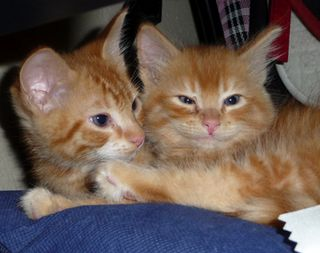 Foster Cat Chronicles - Boone and Johnny Kyler