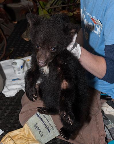 Black-Bear-120790-2