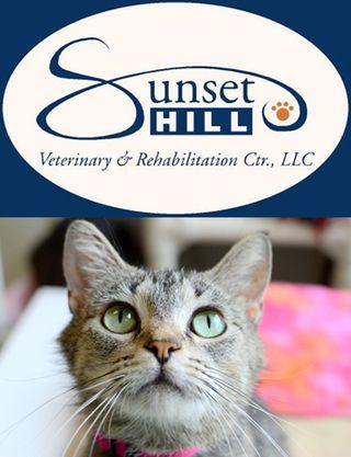 Sunset Hill Vet