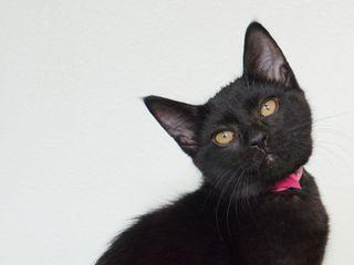 Kitten Libby