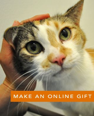 Online-Gift-Button-Goosey-wide