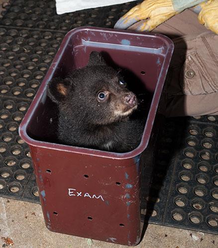 Black-Bear-120790-1