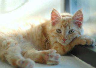 Kitten-071112