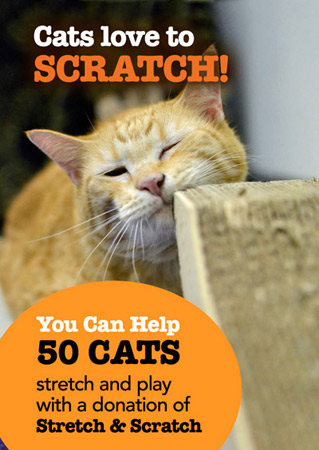Stretch & Scratch Donation Drive