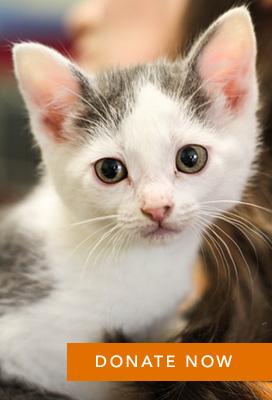 NL-NewYears-Kitten2-2012-Gift-Button