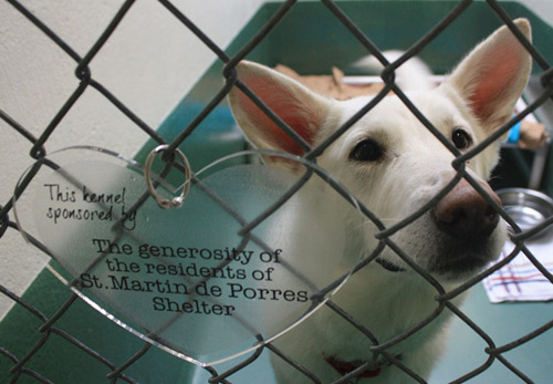 St Martin de Porrres Dog Kennel
