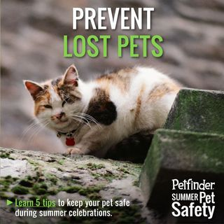 Prevent-lost-pets