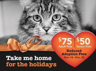 Home for the Holidays Adoption Special