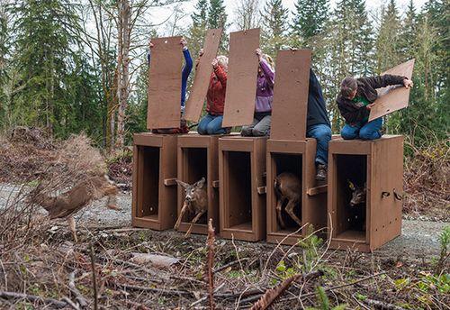 Deer Release