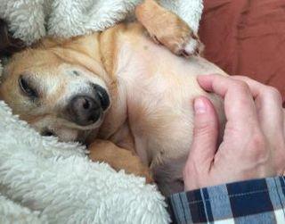 Mimi tummy rub image