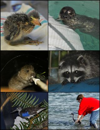 Wildlife at PAWS - August 2014