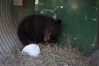 American-Black-Bear-143467-Arrival-123114-JM-(8)-KS-web-resize