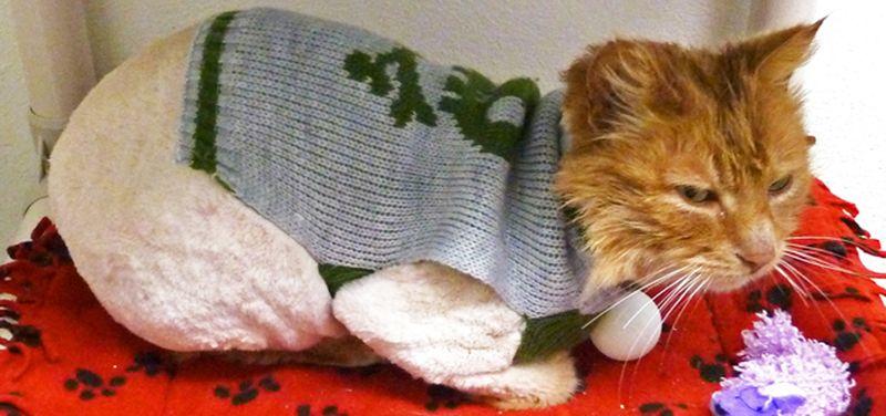 Longfellow in sweater 2