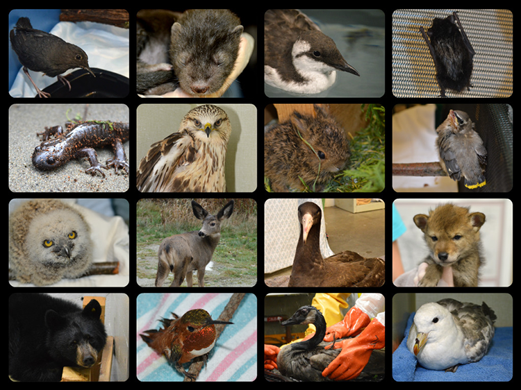 Wildlife blog collage