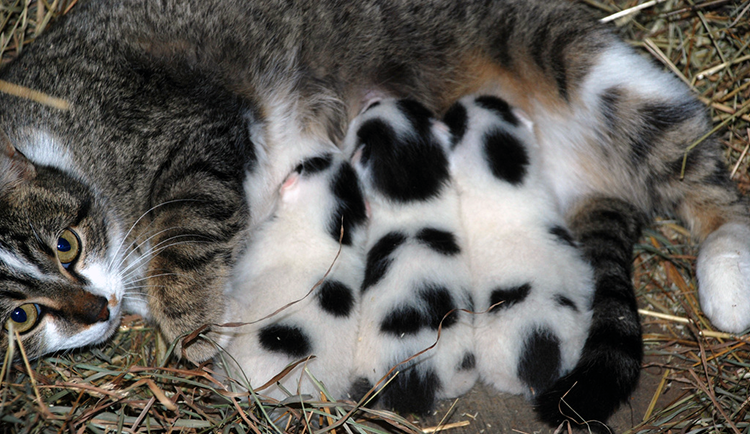 Mom cat and kittens