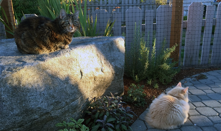 Catio cats lounging sun