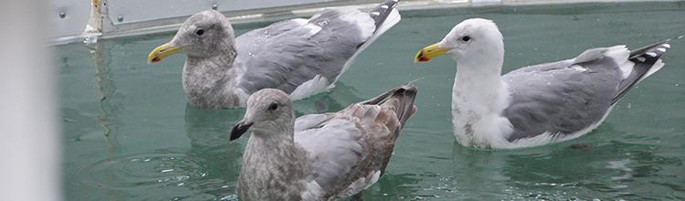 Gulls_blog_2