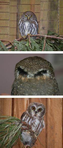 Image-collage-for-blog-KS