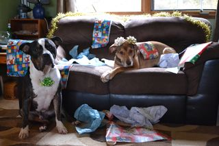 Barnabas-and-Lola-wrapping-gifts