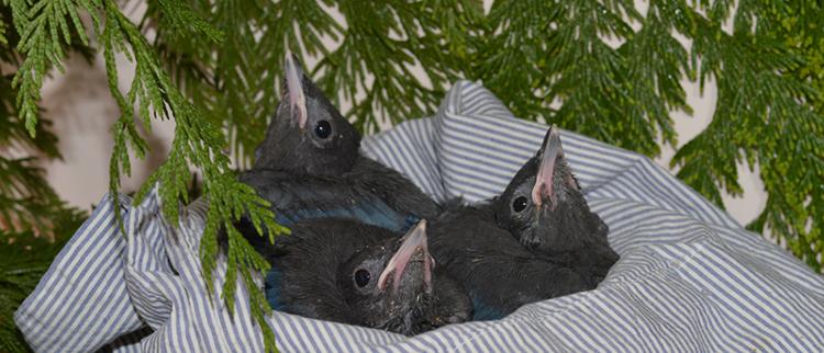 750 baby birds