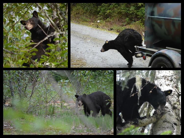 750 bears released