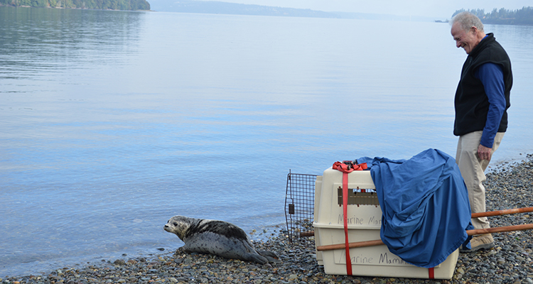 Harbor Seal 142148 Release 09272014 JM (7)_crop