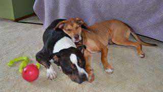 Barnabas-and-Lola-cuddling