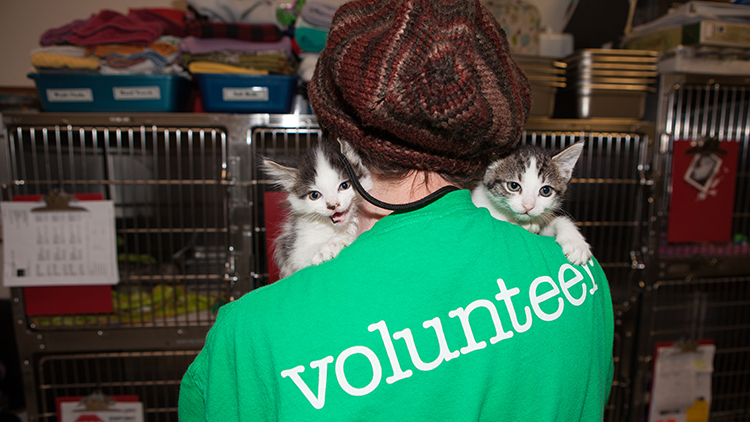 Volunteer with kittens