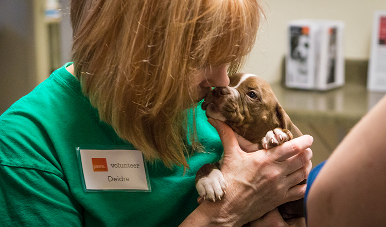 Volunteer with puppy
