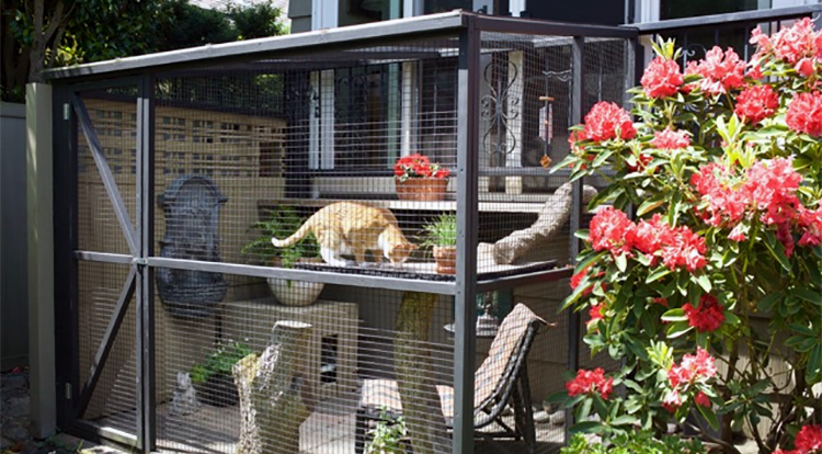 Catio tour outdoor enclosure