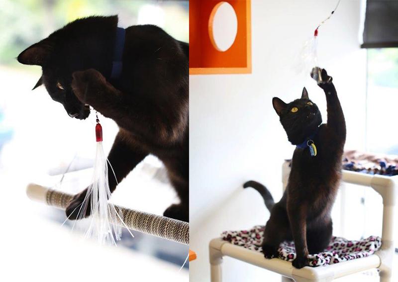 Retail cat 1