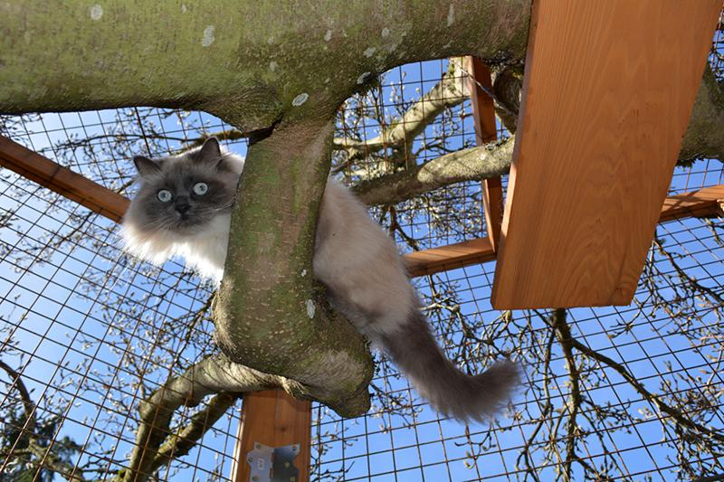 Chateau Gato_Thor cat
