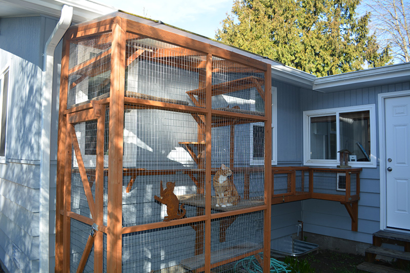 General Catio Tour photo2