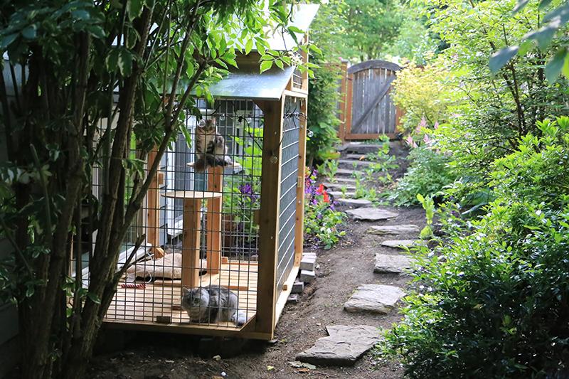 Piku and Rivi's Windowside Wilderness